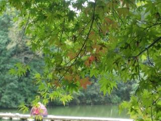 震生湖の紅葉(色づき始め)
