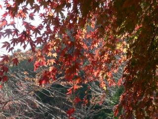 葛葉の泉の紅葉