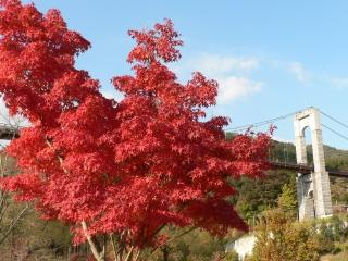 県立秦野戸川公園の紅葉