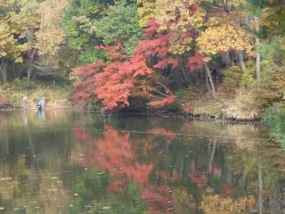 湖に写る紅葉