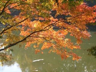 色づき始めの紅葉