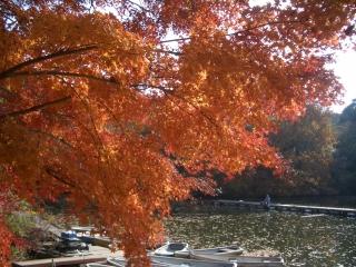 震生湖の黄葉