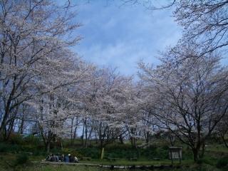 震生湖の桜